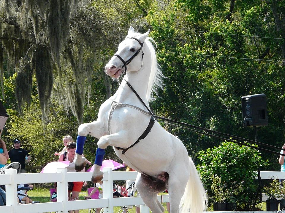 horse-652957_960_720