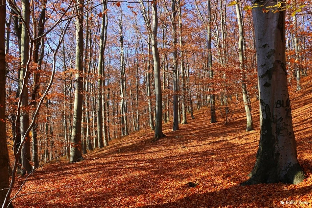 Bükki erdő (f: Bükki fotós - Varga Csaba)