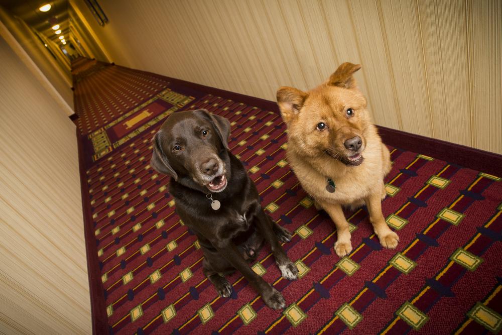 kutyabarát-hotel