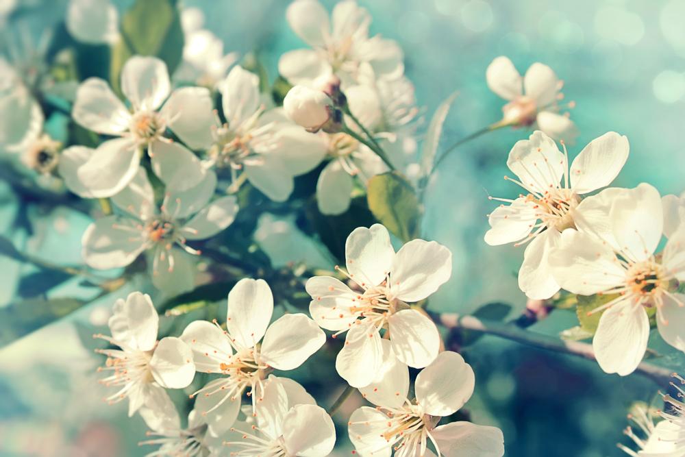 Virágos tavasz Nagykörű