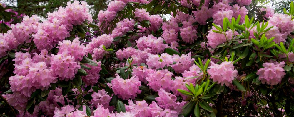 Virágos tavasz -Jeli arborétum