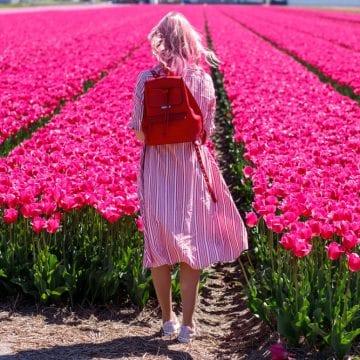 indul-a-tulipanszuret-3-tulipanmezo-terkeppel