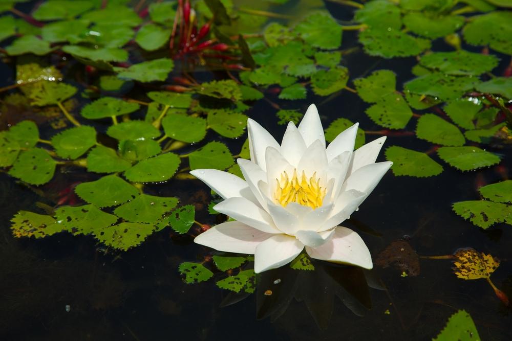 Virágos tavasz - Tisza-tó