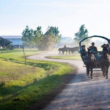 Petőfi kedvenc helyei Magyarországon- Vár az Alföld!