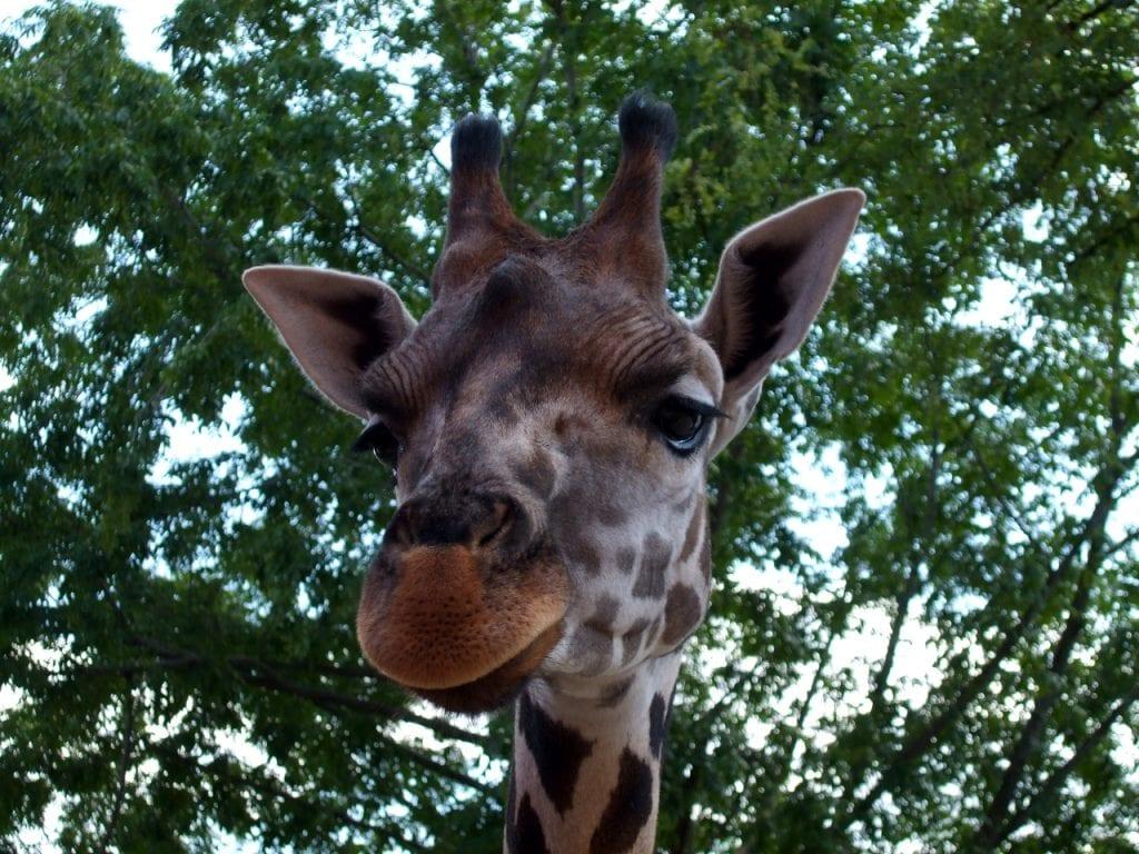 Ezek a legjobb belföldi állatkertek