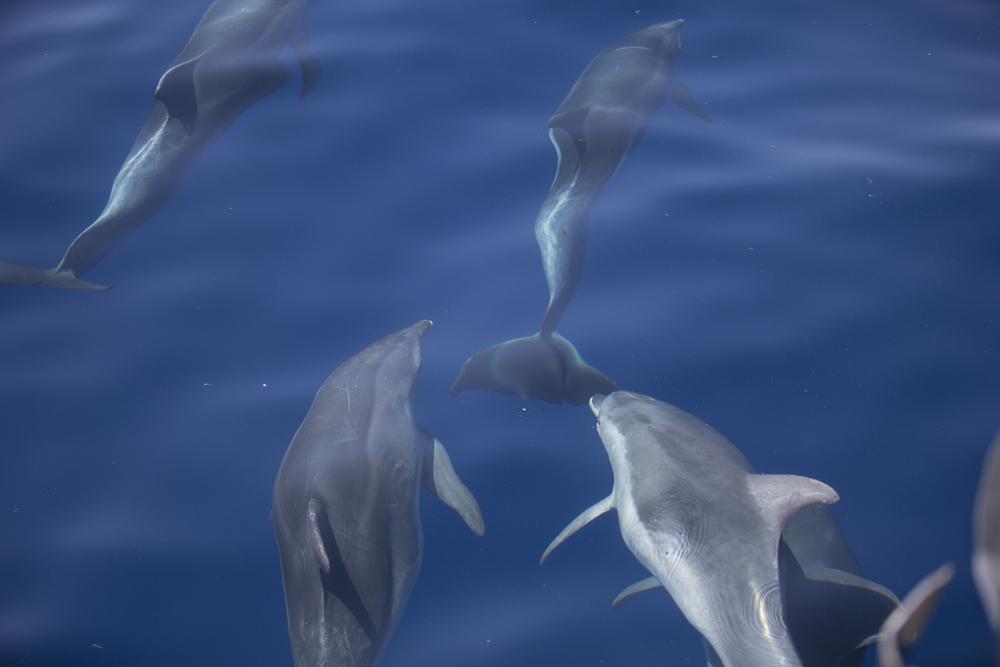 Delfinek Horvátországban