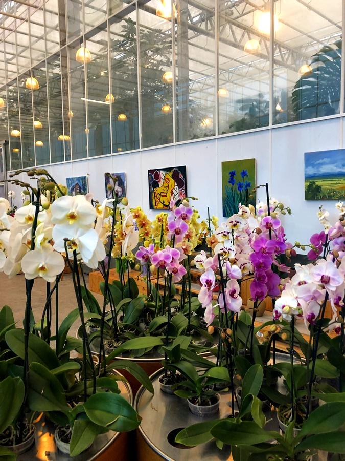 2 millió orchidea szlovénia