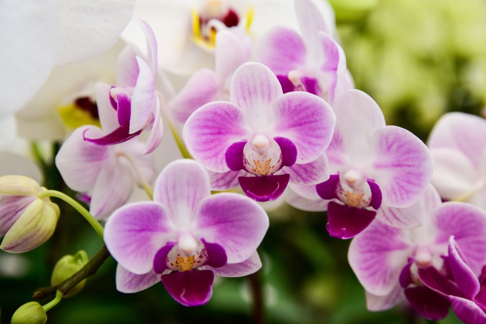 2 millió orchidea