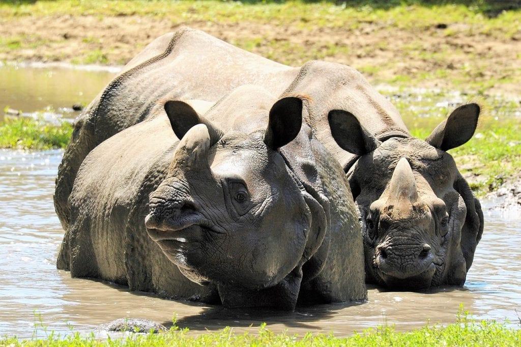 állatgondozó Nyíregyházi Állatpark