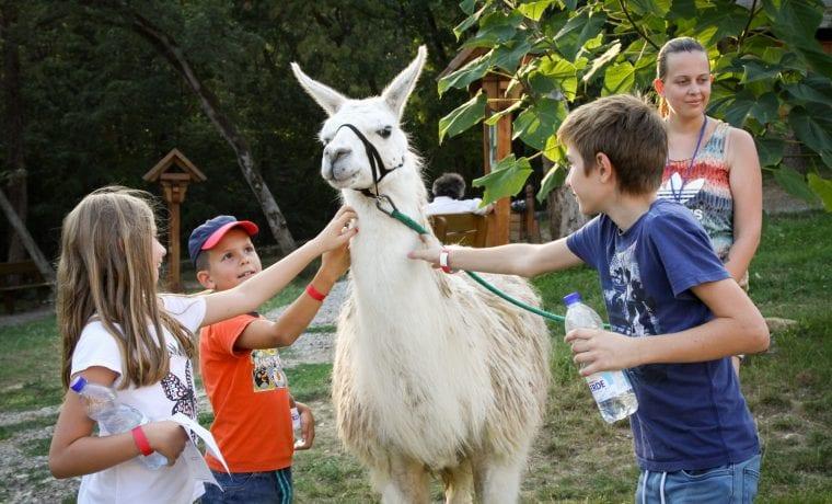 Állatkertek éjszakája 2019 - állatsimogatás