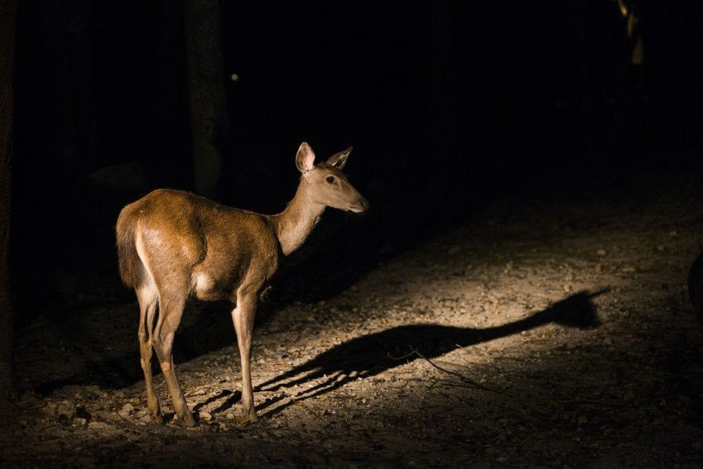 Állatkertek Éjszakája -  programok