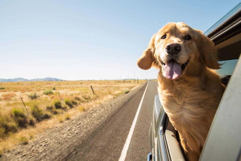10 dolog, ami a kutyás utazás során elengedhetetlen