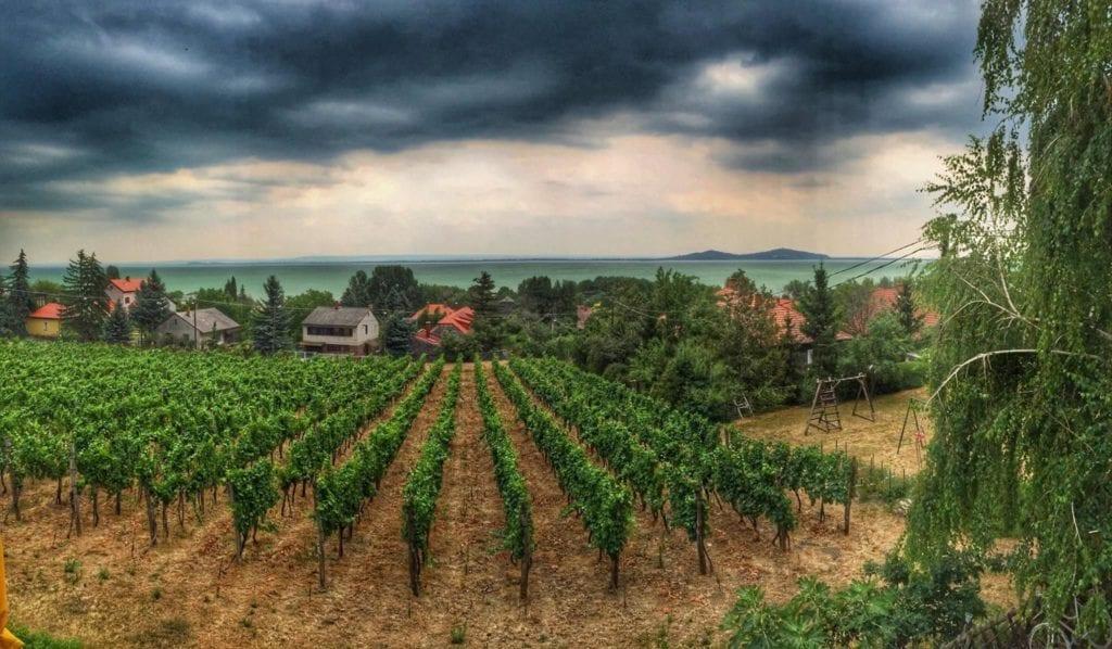 Borászatok Magyarországon, ahonnan nem kell hazavezetned