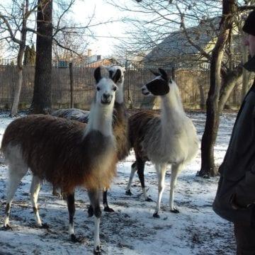 vadaskert kecskemét ADVENTI PROGRAM