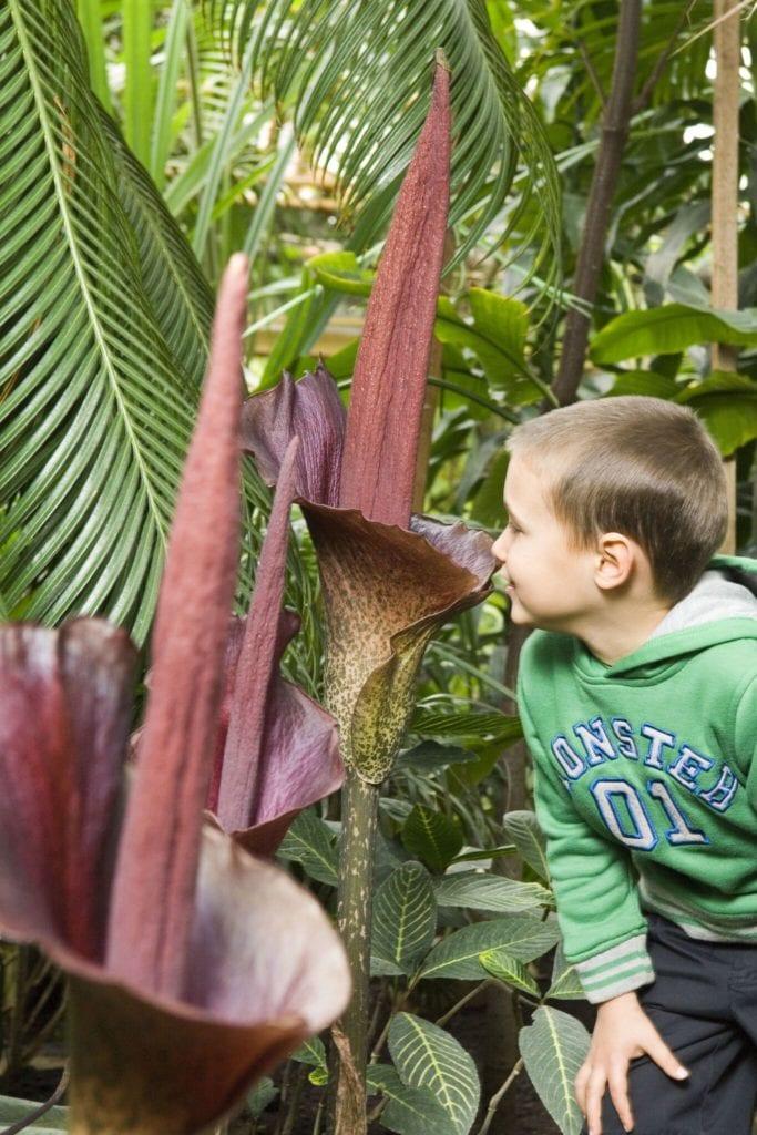 Nyíregyházán gyerekkel – 5+1 legjobb családi program