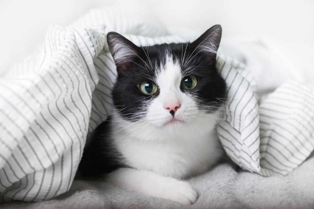 8 macskabarát szállás belföldön - Utazz cicával!
