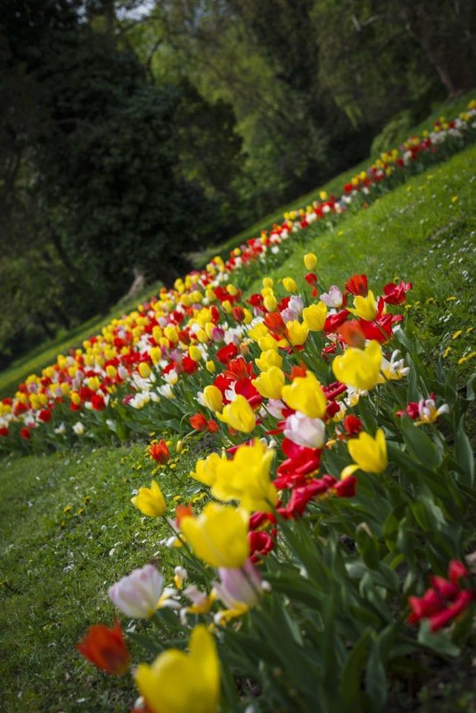 tavaszi kirándulás