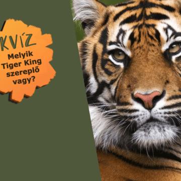 Te melyik Tiger King karakter vagy? 8 egzotikus állatkert rajongóknak