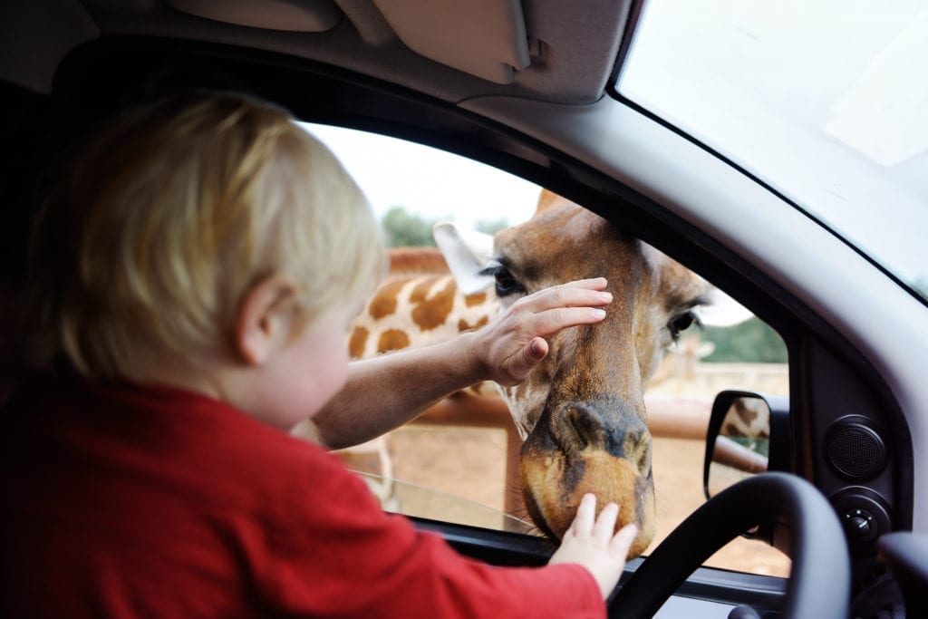 Magyar Nemzeti Cirkusz Safari park jegyárak 2020