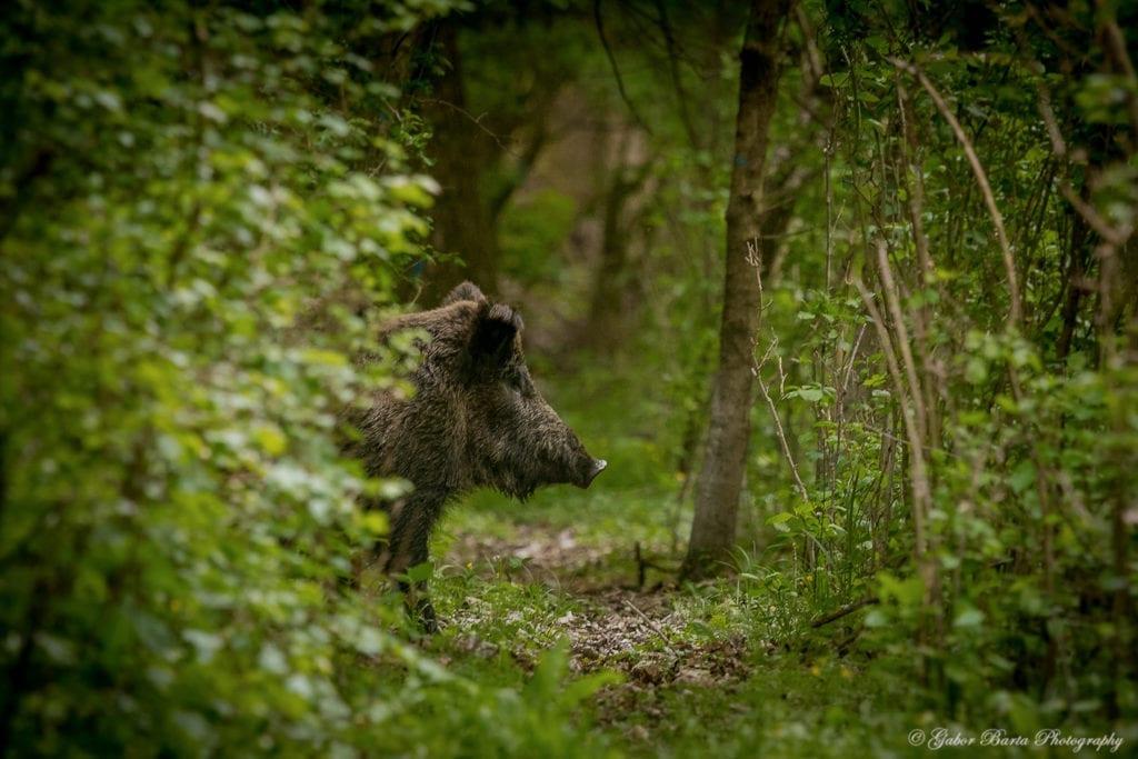 Madárles, kisvasút, vízi és gyalogos túra – vár a gemenci erdő!