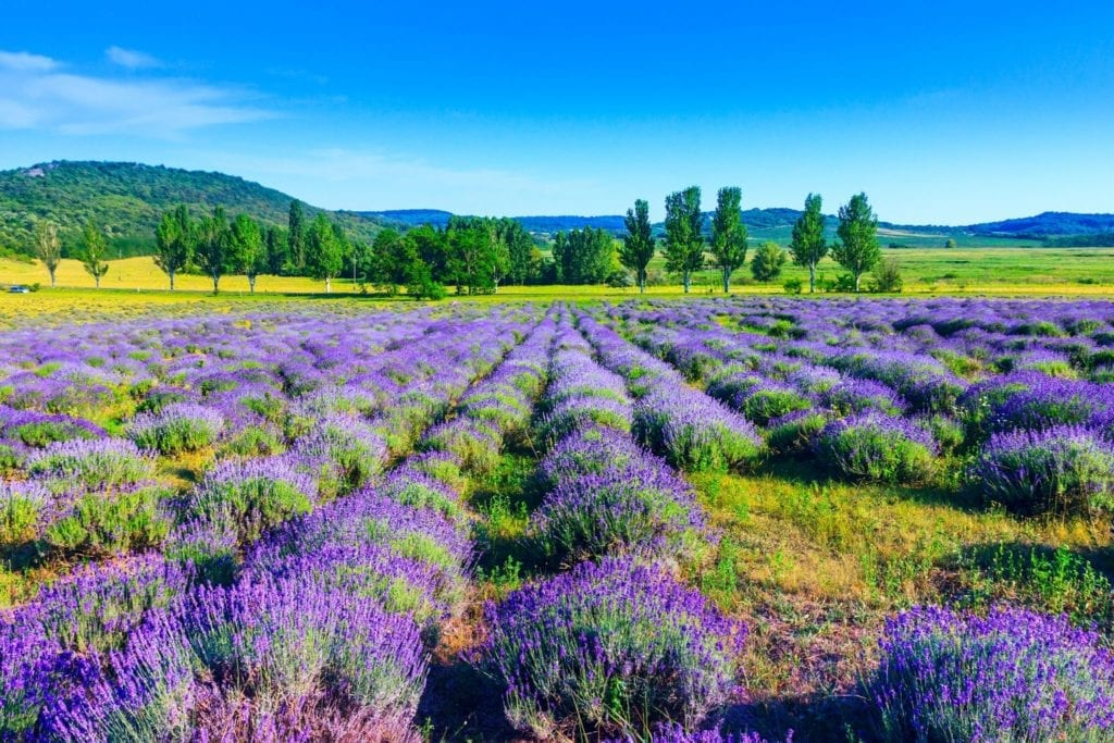 Wellness ízek, illatok - Utazás az érzékek útján