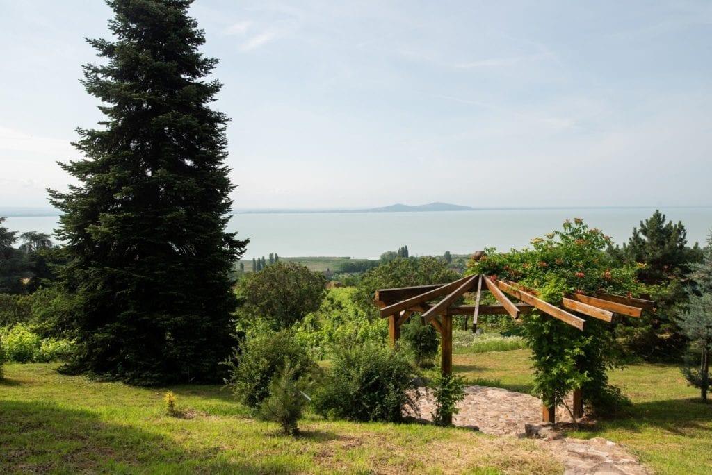 Százéves cédrusok Badacsonyban – Séta a Folly Arborétum és Borászatban