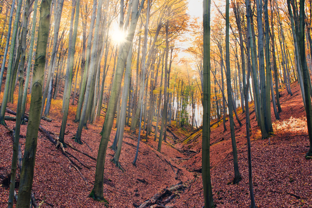Falvak, amelyek ősszel a legszebbek: színpompás erdők és kuckós szállások várnak