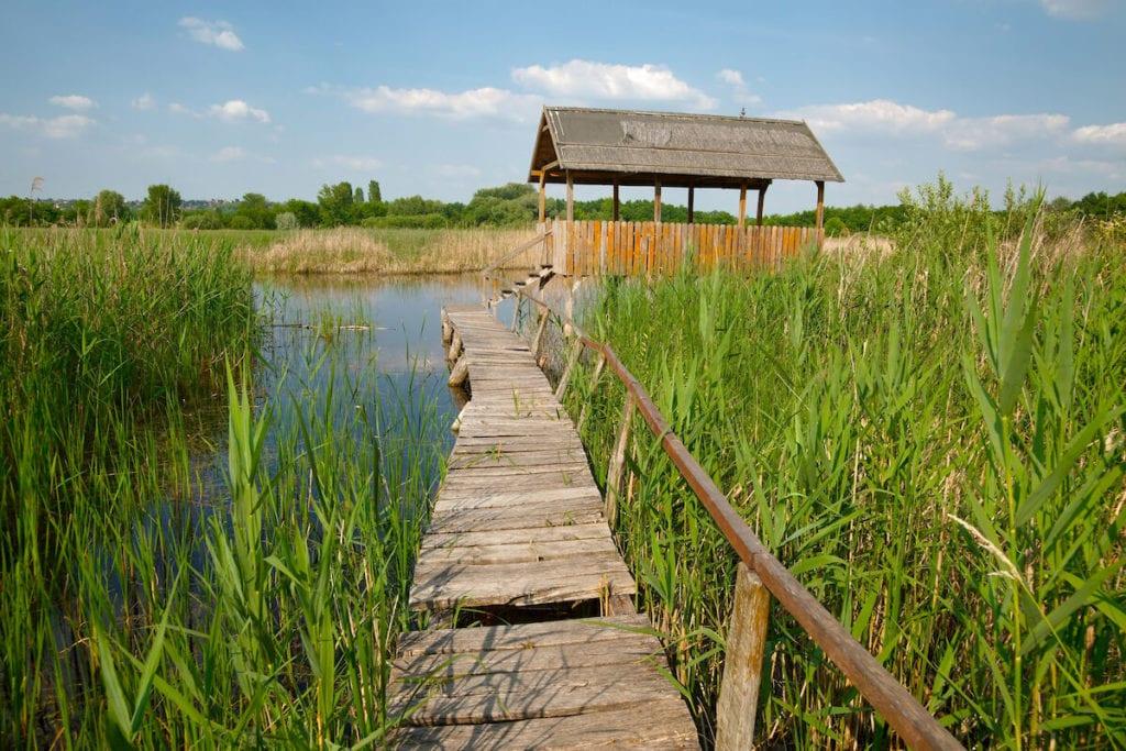 TOP 5 izgalmas madárles Magyarországon, ahová egész évben elmehettek