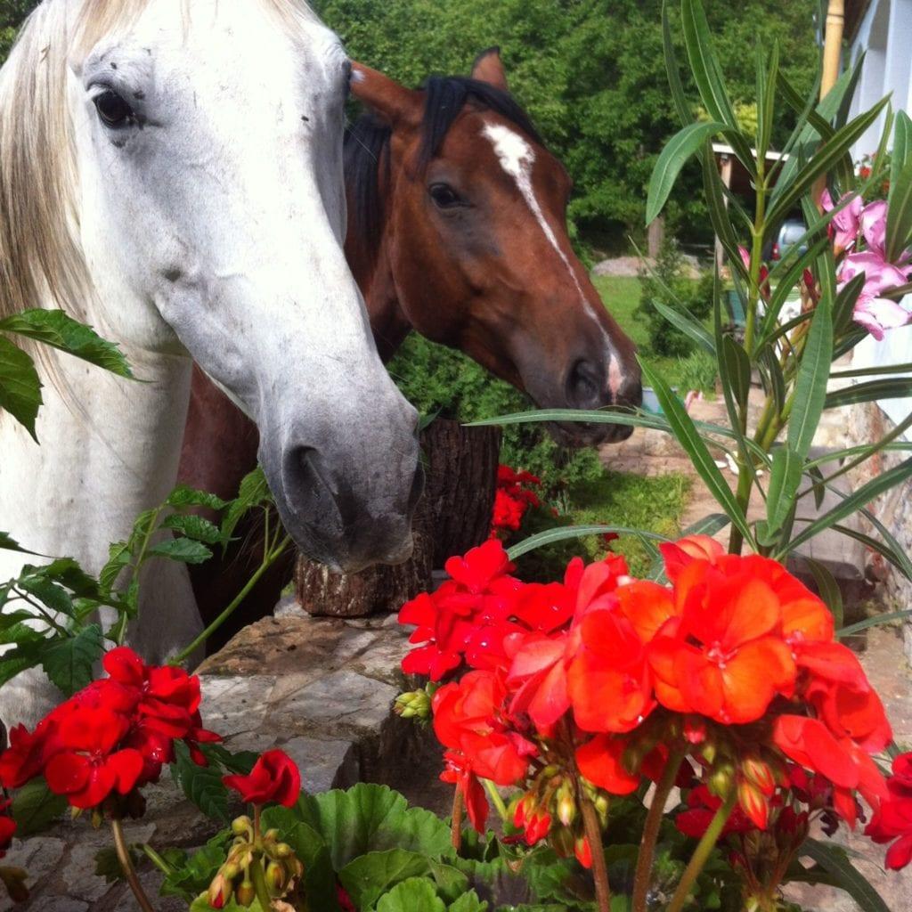 Béke és nyugalom a völgy oltalmában: Natur Kán Üdülőház