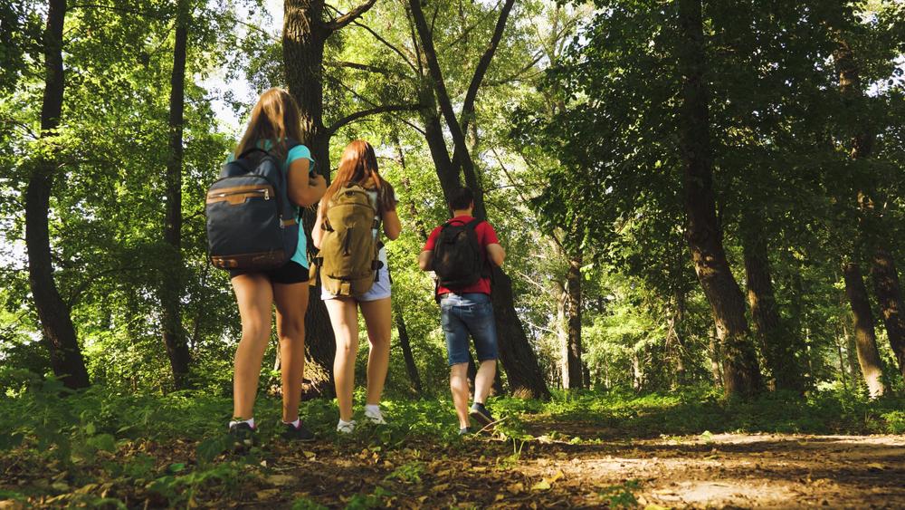 Nagy Erdő Kisokos – Hazánk erdő fajtái + 10 remek erdei kirándulóhely tipp!
