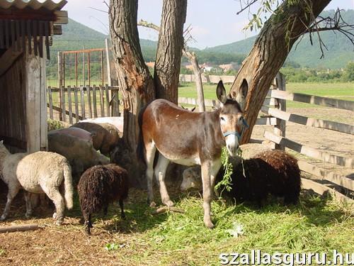 Állatbarát szálláshelyek, ahol még extra állatsimogató is vár