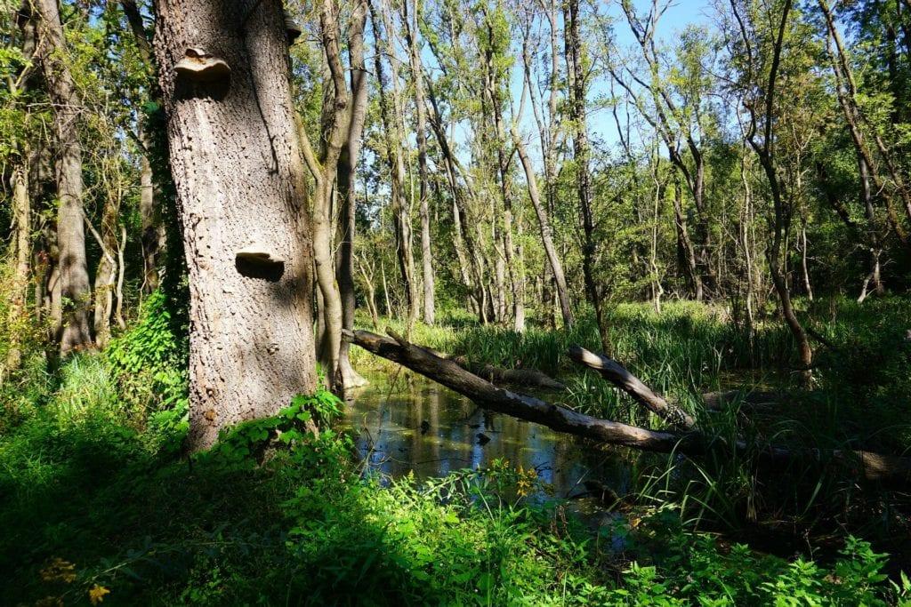 erdő kisokos