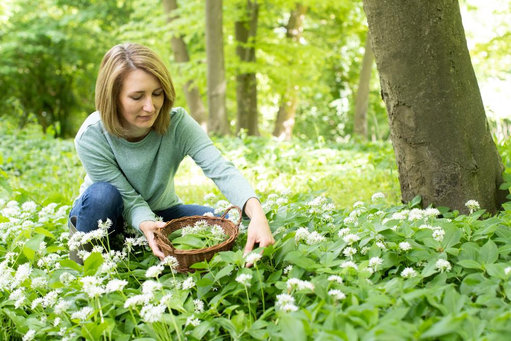 Illatos medvehagyma csokrok – Itt a medvehagymaszezon, mutatjuk a legjobb tavaszi gyűjtőhelyeket