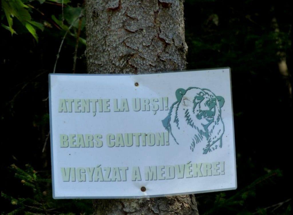 Medvék nyomában – Ezeken a helyeken biztonságban nézhetünk mackókat