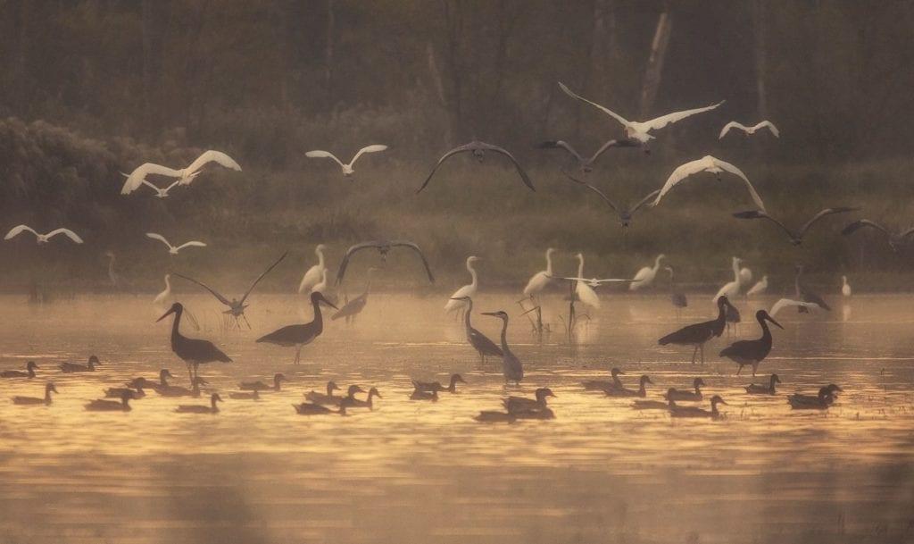 Top 7+1 madárpark Magyarországon – a legszebb díszmadaraktól a hazai szárnyasokig