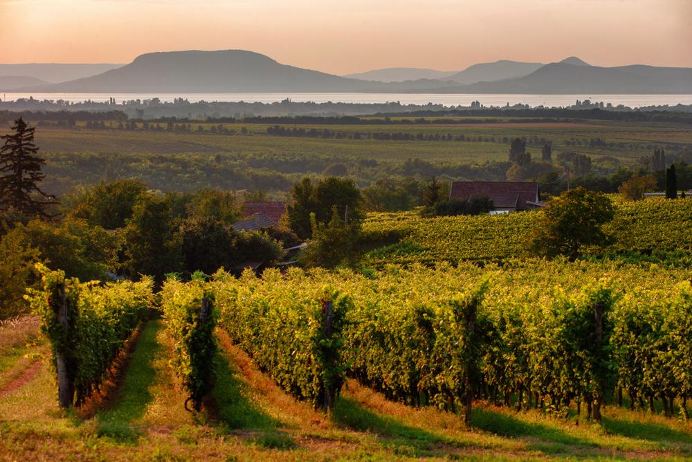 Szédületes őszi élményszüret: TOP 10 bakancslistás szálláshely a hazai borvidékekről