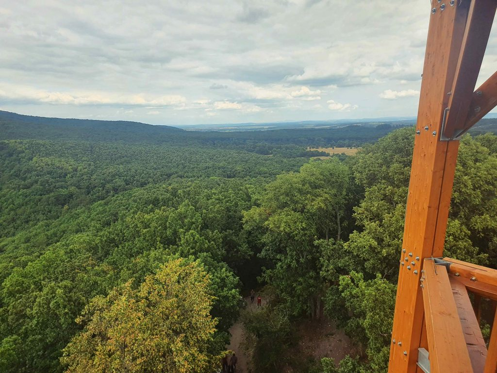 Erdők-mezők aranya, Királyrét – Egy családi kirándulóhely, amit a gyerekek is imádni fognak