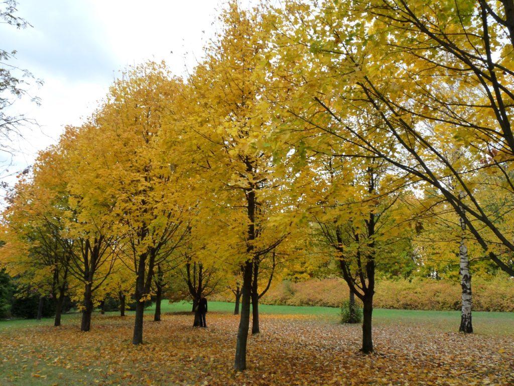 TOP 10 izgalmas őszi városnézés – Barangolásra fel!